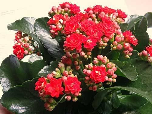 Декоративные растения для дома - как выбрать красивые и полезные домашние цветы.