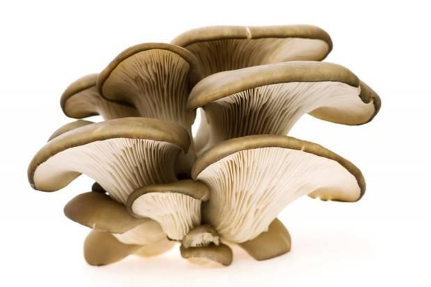 Вешенки: как чистить и мыть грибы перед приготовлением - растения и огород