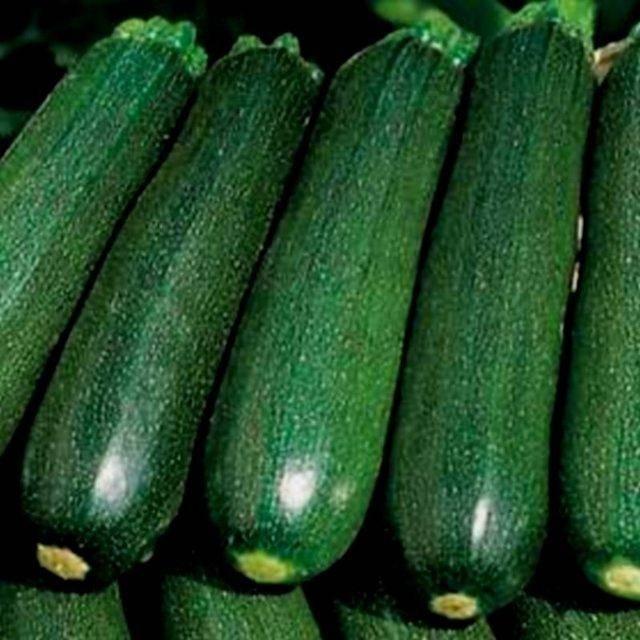 Сорт кабачка цукеша, описание, характеристика и отзывы, а также особенности выращивания