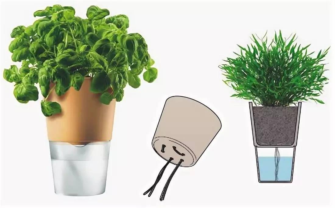 Автополив для комнатных растений: особенности системы автополива домашних цветов. как выбрать простую модель для 4 растений? как ею пользоваться?