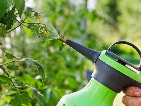 Спасатель для томатов: инструкция по применению, отзывы об эффективности средства