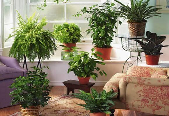 Тенелюбивые и теневыносливые комнатные растения с фото и названиями