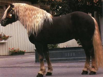 Персонажи пони — my little pony & equestria girls