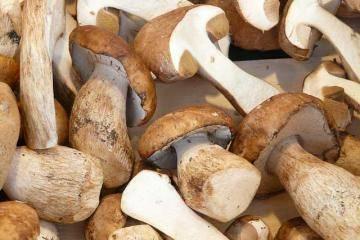 Белые грибы: рецепты приготовления блюд с фото, как правильно чистить и готовить боровики