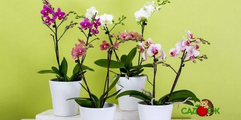 Как заставить цвести орхидею фаленопсис в домашних условиях: что делать, если уход не даёт результатов, и какую стимуляцию выбрать, чтобы разбудить растение? selo.guru — интернет портал о сельском хозяйстве