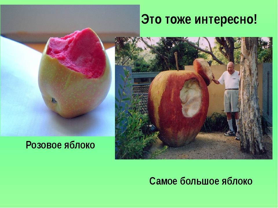 Самые интересные факты о яблоках | vivareit