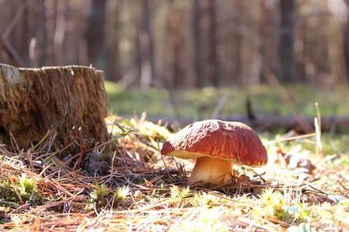 Как заморозить грибы на зиму и сколько можно их хранить в морозилке
