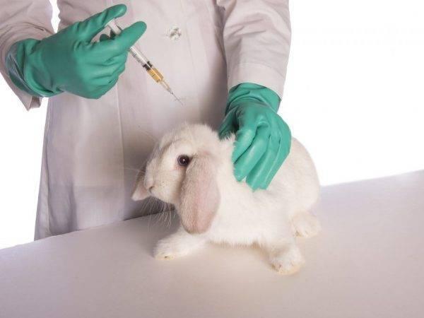 Ветеринарный антибиотик дитрим: показания, инструкция по применению, советы специалистов