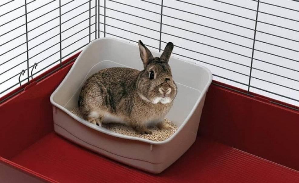 Как научить кролика ходить в туалет в лоток