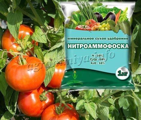 Нитрофоска для томатов – 6 этапов использования и главные особенности