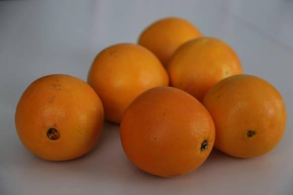 Как вырастить дома апельсиновое дерево вашингтон навел