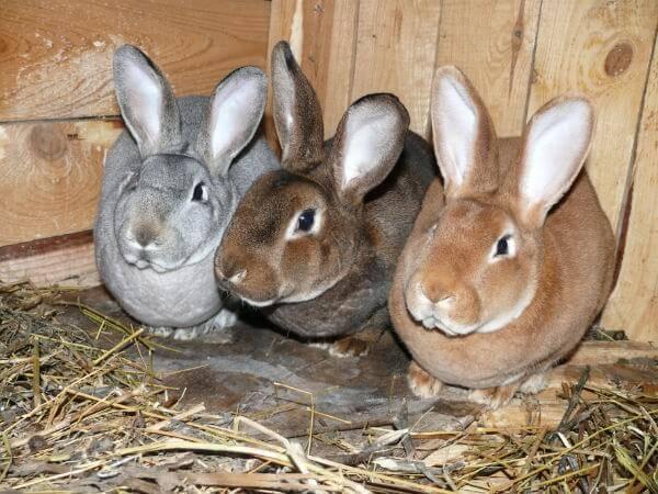 Декоративные кролики: ? сколько живут, как ухаживать, породы