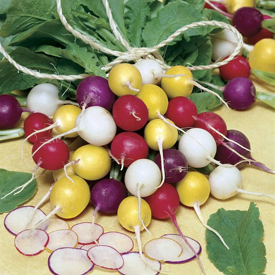 Особенности выращивания редиса в теплице и в открытом грунте. практические рекомендации