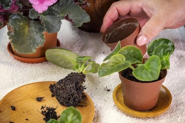 Подкормка дрожжами для растений как удобрение в огороде