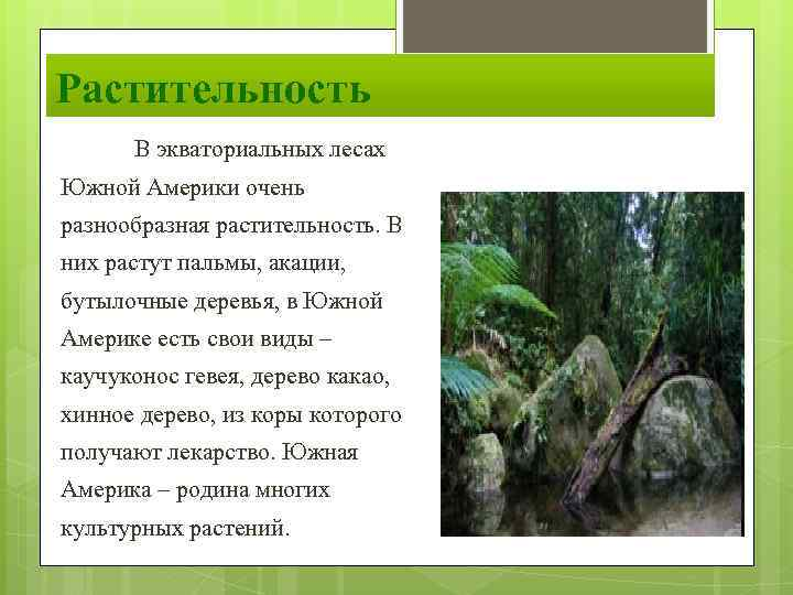Какие виды орхидей существуют в природе