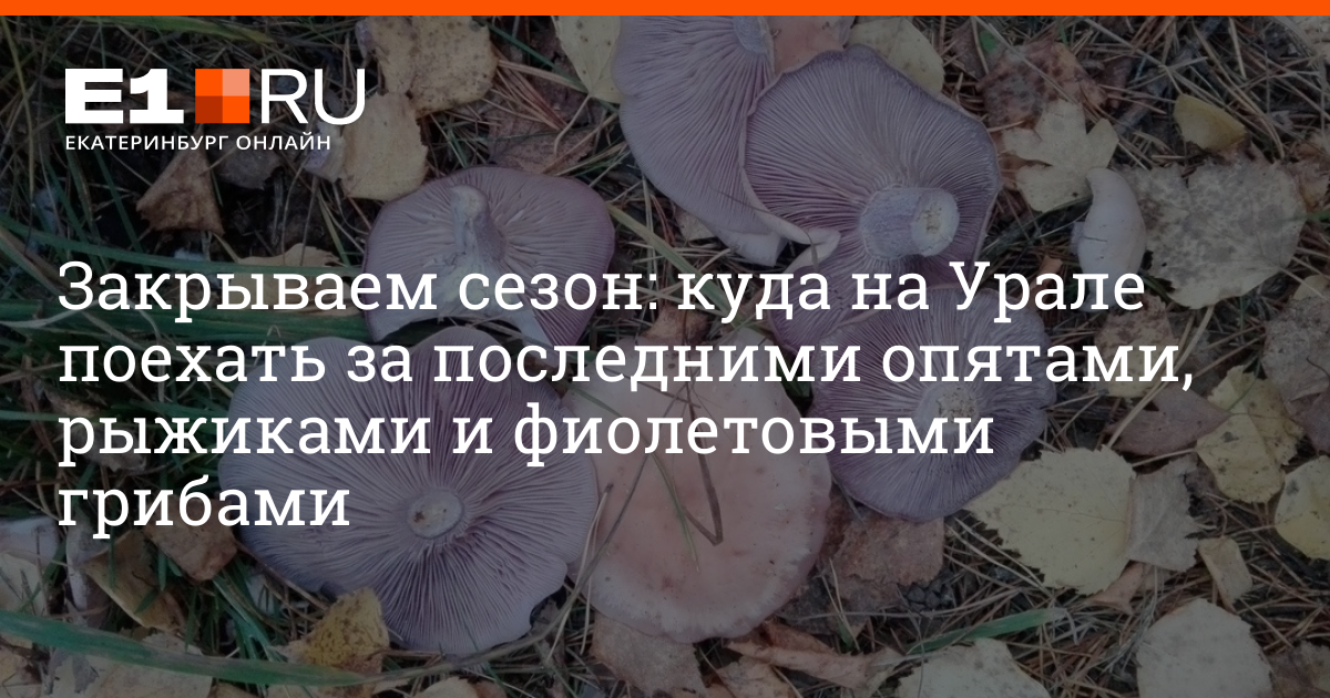 Опенок осенний: где растет и когда его собирать: грибники советуют