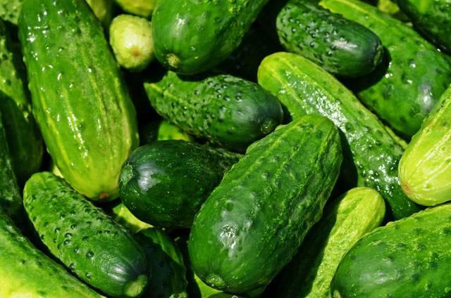 Огурец: калорийность на 100 грамм — 14 ккал. белки, жиры, углеводы, химический состав.