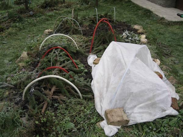 Гортензия – уход осенью и подготовка к зиме