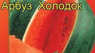Характеристики и описание сорта арбуза холодок, выращивание и уход, отзывы