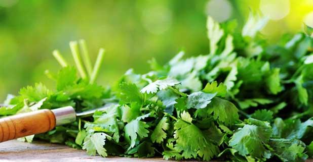 Петрушка на зиму (обычная и корневая): лучшие рецепты заготовок, как заготовить корень и зелень в сухом, замороженном и консервированном виде