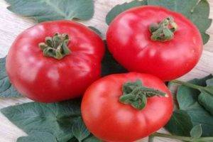 Томат ирина f1: характеристика и описание сорта