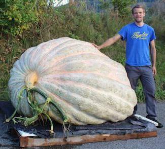7 сортов самых крупных тыкв и рекомендации по их выращиванию. описание, особенности, фото — ботаничка.ru