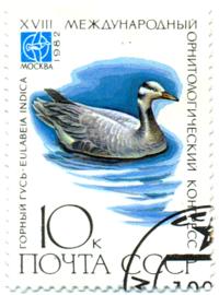 Породы домашних гусей: название и описание видов с фото, разведение
