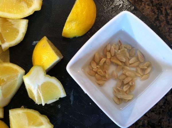 Как вырастить лимон из косточки в домашних условиях - всаду.ру