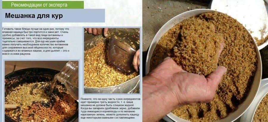 Мешанка для кур несушек — как приготовить, рецепты
