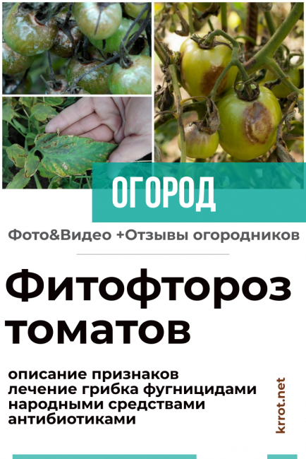 Фитофтора: борьба и обработка, средства от фитофтороза