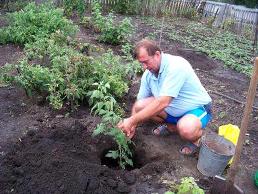 Как посадить малину весной: пошаговое руководство как посадить малину весной: пошаговое руководство