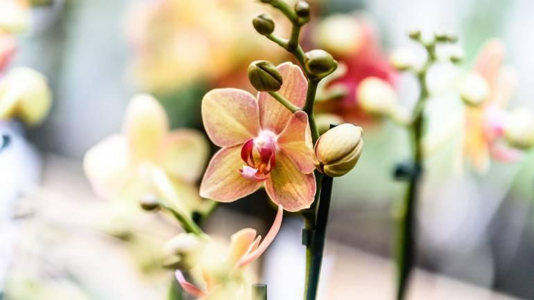 Полив орхидеи после пересадки в другой горшок: нужно ли сразу увлажнять сухой грунт или нет, когда и как можно применять корневин в домашних условиях? selo.guru — интернет портал о сельском хозяйстве