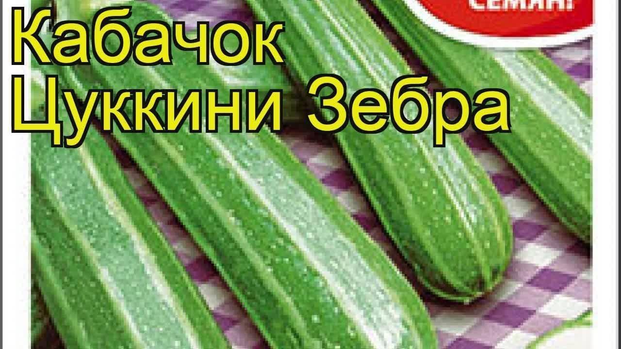 Кабачок зебра описание фото отзывы - дневник садовода parnikisemena.ru