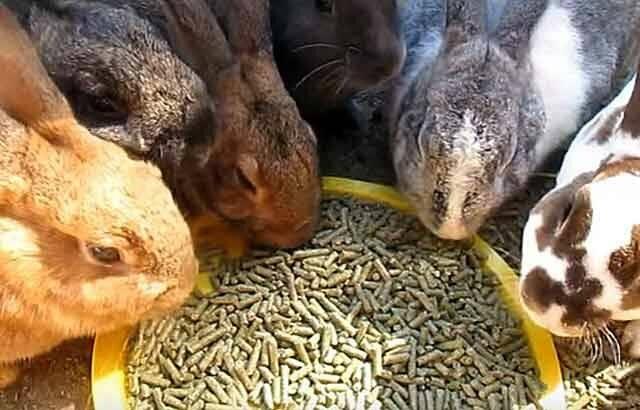 Комбикорм для кроликов: состав полнорационного комбикорма