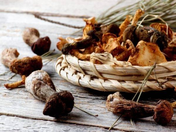 Какие грибы можно сушить на зиму, а какие нельзя и почему