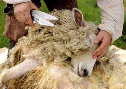 Ножницы для стрижки овец: их виды и как заточить