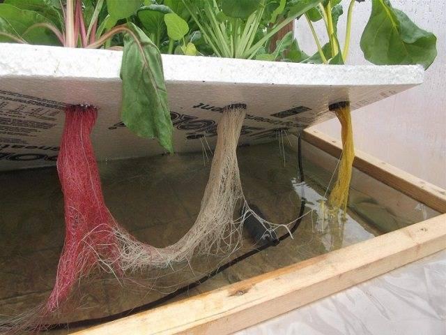 Оборудование для выращивания на гидропонике » школа гидропоники и современного растениеводства гидроном.