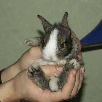 Почему кусают кролики: как отучить — selok.info