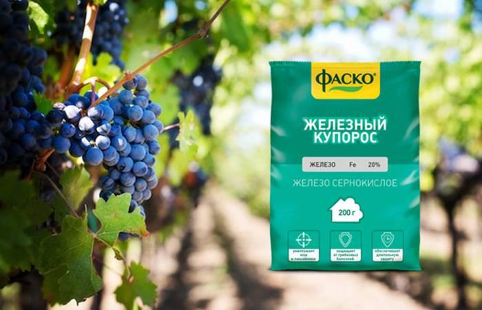 Железный купорос для винограда: как применять, как развести, как правильно обработать виноград