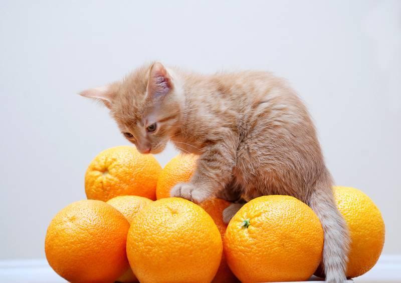 Какой запах не любят кошки, и с чем это связано?