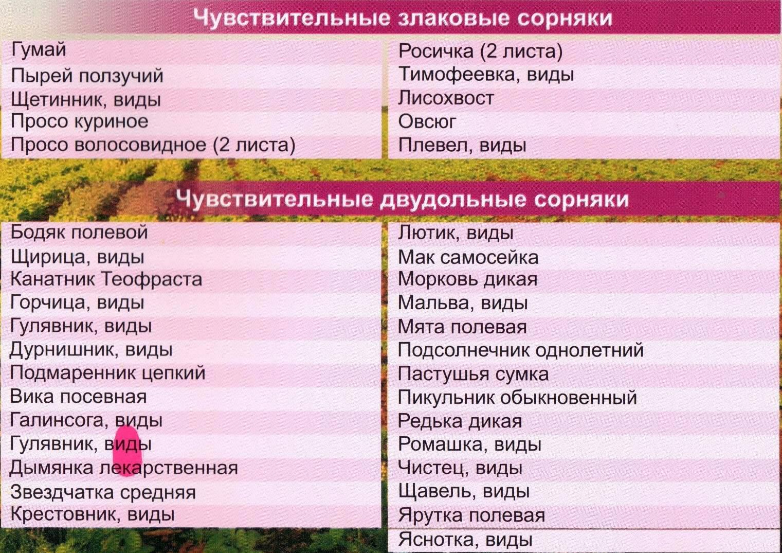 Гербициды для картофеля от сорняков + вредителей: правила обработки почвы