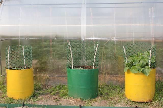 Читать книгу все о томатах и огурцах от октябрины ганичкиной октябрины ганичкиной : онлайн чтение - страница 3
