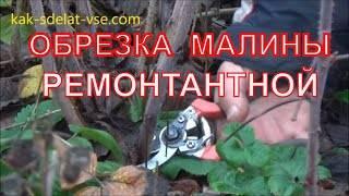 Уход за малиной осенью: подготовка малинника к зиме