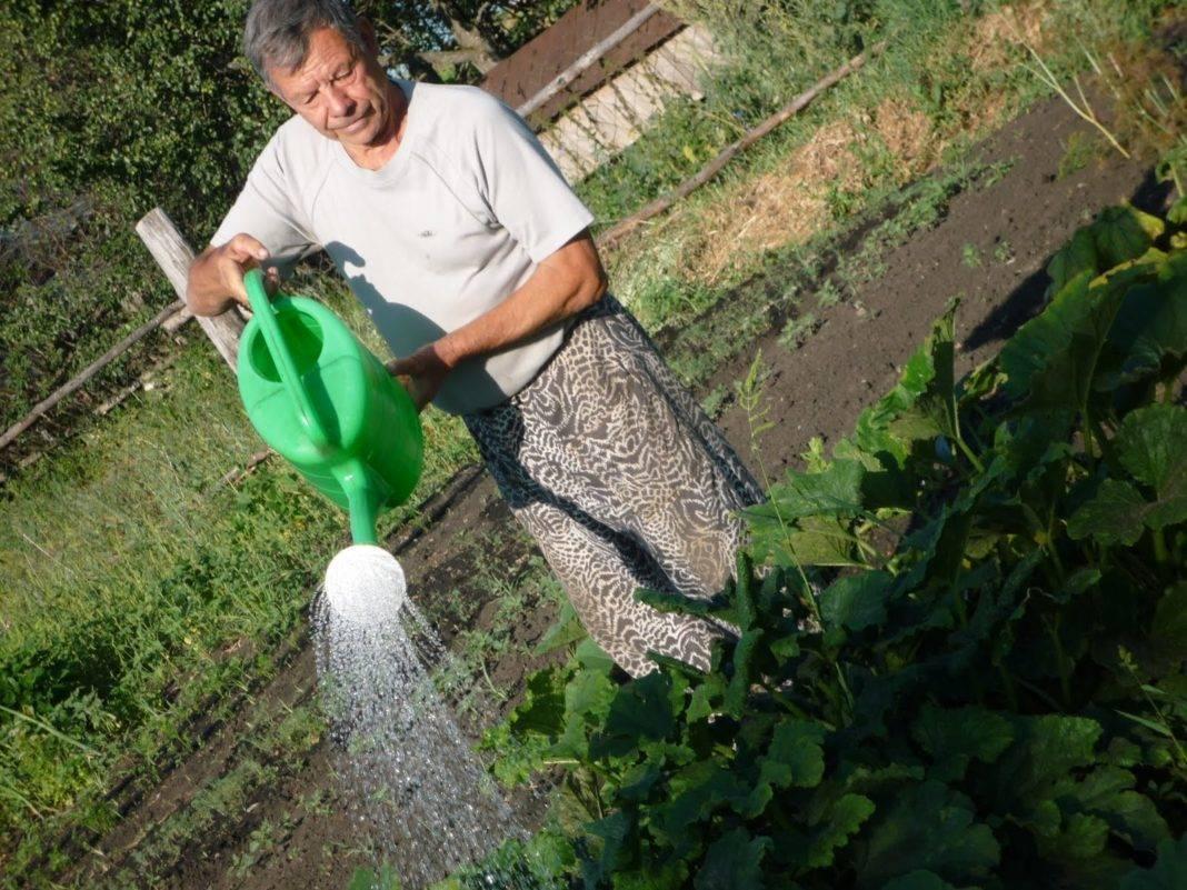 Как часто поливать кабачки в открытом грунте: как правильно