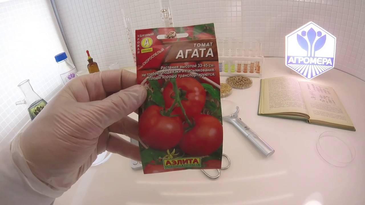 Неприхотливый томат: полное описание сорта агата