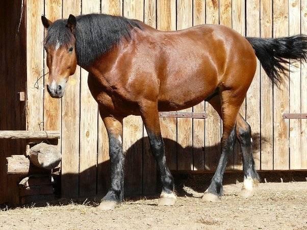 Болезни лошадей - профилактика и современное лечение основных заболеваний (видео + 110 фото)