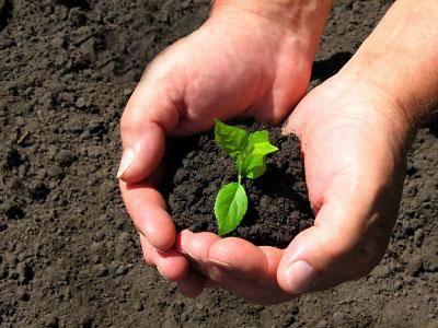Чем обработать землю от вредителей перед посадкой: народные средства и химические препараты