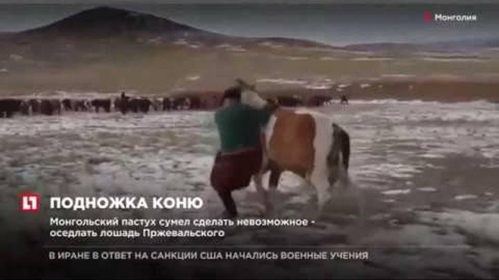 Как правильно садиться на лошадь и езда в манеже