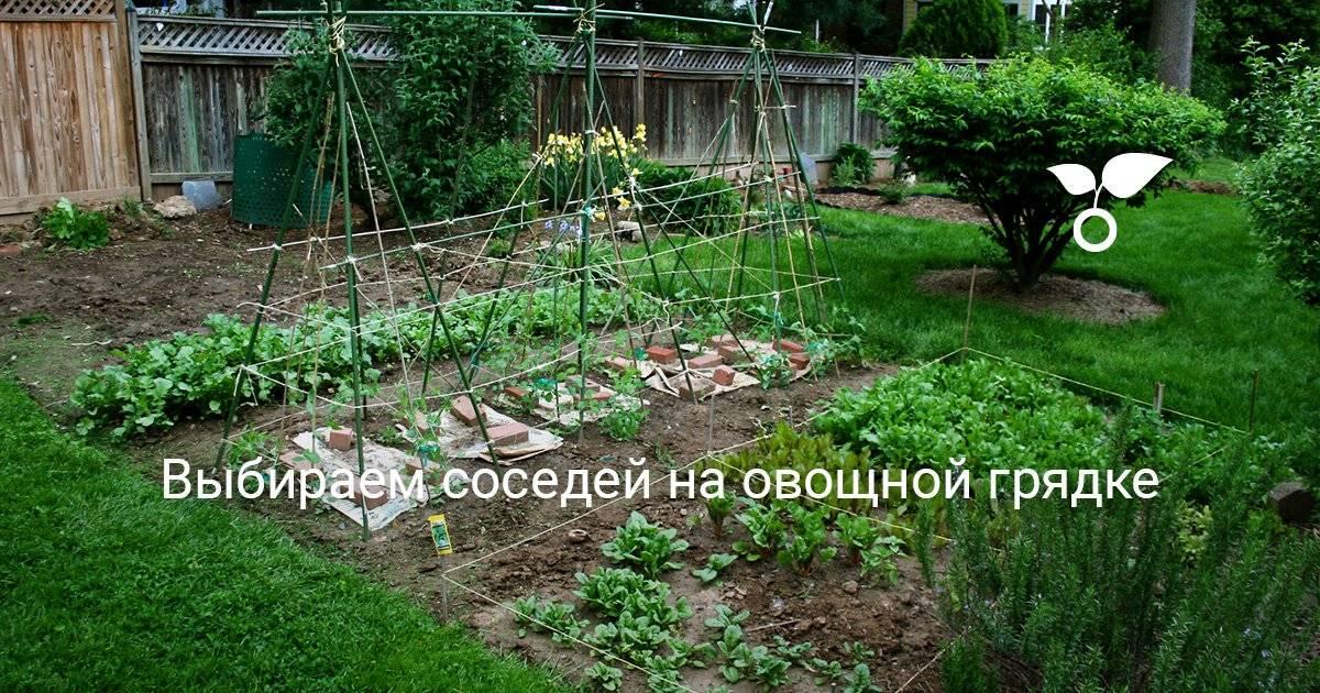 Что можно и нельзя сажать рядом с луком: полезное и вредное соседство для урожая