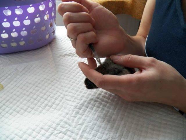 Вакцина ласота для голубей применение как разводить - агро эксперт